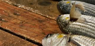 Mangiare pesce nel Gargano: trabucchi, tramonti e acqua cristallina