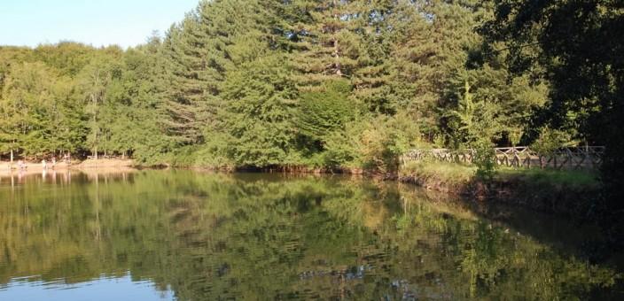 Visitare la Foresta Umbra