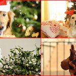 Vacanze di Natale in Puglia con gli animali domestici