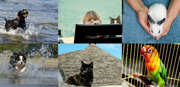 In Vacanza con i nostri amici animali